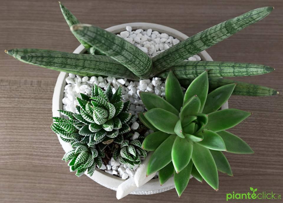 Pianteclick tutte le piante che vuoi a casa tua con for Tutte le piante grasse